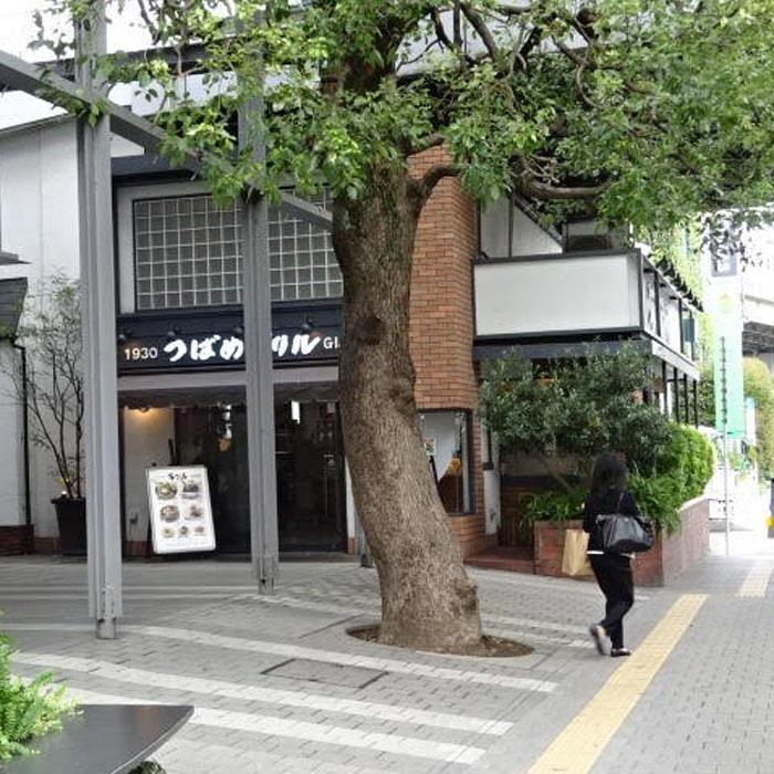 アップルジム二子玉川店までの道のり3・木の生えた信号を渡り左に曲がります。